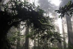 Portale del terreno boscoso Immagini Stock