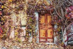 Portas abandonadas velhas cobertos de vegetação com as videiras no outono fotografia de stock