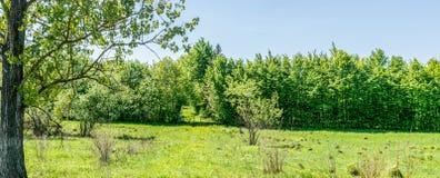 Portas de madeira à propriedade privada foto de stock