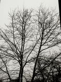 Portata dell'albero Fotografia Stock