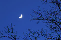 Portata per la luna Fotografia Stock Libera da Diritti