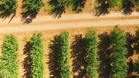 Portata sopra gli alberi da frutto verdi archivi video
