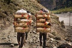 Portatori che trasportano pollo in gabbie Fotografie Stock