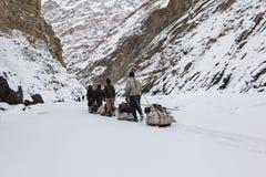 Portatori e le loro slitte sul fiume congelato di Zanskar fotografia stock libera da diritti