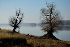 Porte d'arbre vers la rivière Images libres de droits