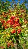 Porte des fruits de bois photos libres de droits