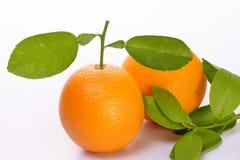 porte des fruits l'orange Image libre de droits
