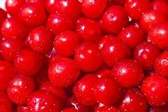 Porte des fruits la cerise duveteuse Photos stock
