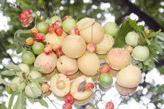 Porte des fruits le fond en nature images stock