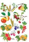 Porte des fruits le ramassage Photographie stock