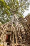 Porte entourée par la racine vieille d'un siècle d'arbre, merci temple de Prohm, Angkor Thom, Siem Reap, Cambodge Photo libre de droits