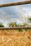 Porte et blé de zone de ferme Images libres de droits