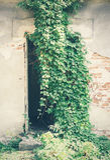 Porte et mauvaises herbes cassées Images libres de droits