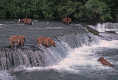 porte l'ours gris Photos libres de droits