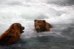 porte l'ours gris de dialogue Images libres de droits