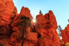 Porte-malheur en canyon rouge en Utah, Etats-Unis Image stock