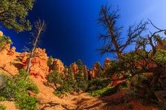 Porte-malheur en canyon rouge en Utah, Etats-Unis Photographie stock libre de droits