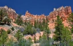 Porte-malheur moussus de traînée de crique, parc national de canyon de bryce, Utah, Etats-Unis Photographie stock