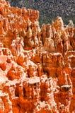 Porte-malheur rouges, point de Ponderosa, Bryce Canyon Image stock