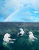 porte polaire images libres de droits