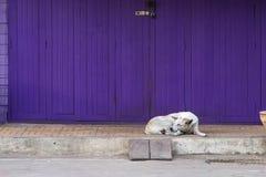 Porte pourpre de rétro pliage avec le chien somnolent dans le style de vintage photographie stock