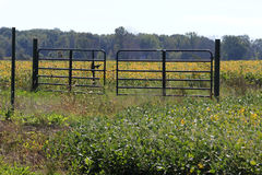 Porte près de champ de maïs Image stock