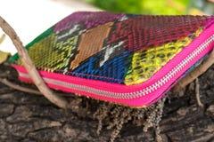 Portefeuille de luxe de cuir de serpent sur le fond en bois Bourse multy de couleur de python cher de peau de serpent Photo stock