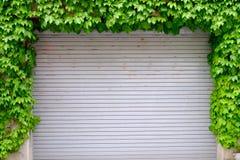 Portelli scorrevoli che hanno edera intorno Fotografie Stock Libere da Diritti