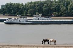 Porter-commercez sur un fleuve hollandais photos stock