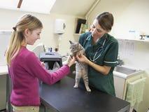 porter des jeunes de vétérinaire de fille d'inspection de chat Images stock