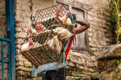 Porter transporting chicken. Cage full of chicken being transported by a porter, Nepal Stock Image