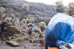 Porteros con los sacos en las cabezas en la manera a Kilimanjaro foto de archivo libre de regalías