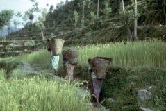 Porteros de las mujeres del Nepali imagenes de archivo