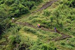 Porteros de Sherpa que llevan backpaks pesados Imagen de archivo