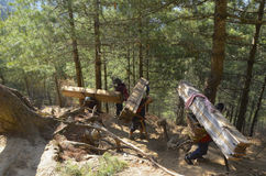 Porters carrying lumber Stock Photography