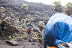 Porters with sacks on heads on the way to Kilimanjaro Royalty Free Stock Photo