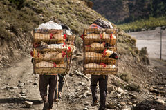 Porters transporting chicken in cages Stock Photos