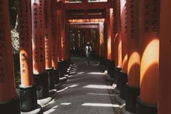 Portes de Torii, Japon images libres de droits