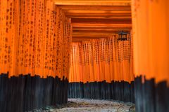 Portes de Torii, tombeau de Fushimi Inari Taisha situ? dans Fushimi-ku photo stock