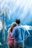 Portez la vue des couples regardant des poissons dans le réservoir Images stock