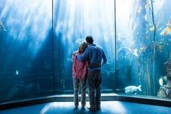 Portez la vue des couples regardant des poissons dans le réservoir Photos stock