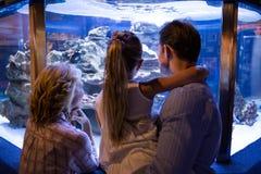 Portez la vue des couples regardant des poissons dans le réservoir Photographie stock libre de droits