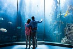 Portez la vue des couples regardant des poissons dans le réservoir Photos libres de droits