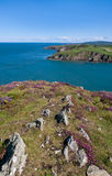 Porth Wen coastline Stock Image