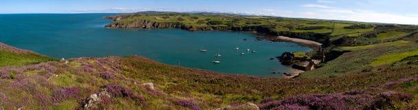 Porth Wen heather panorama Stock Photography
