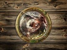 Porthole with hippopotamus Stock Photography