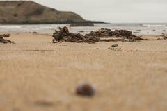 Porthor, οι σφυρίζοντας άμμοι - φύκια, άμμος και νερό στοκ φωτογραφία με δικαίωμα ελεύθερης χρήσης
