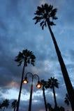 Porti della lampada che appendono con le palme Fotografie Stock Libere da Diritti