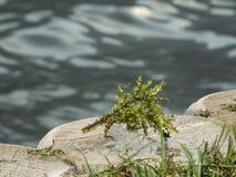 Porticciolo di Najas dal caldaro del lago Immagini Stock Libere da Diritti
