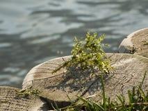 Porticciolo di Najas dal lago caldaro_near Fotografie Stock Libere da Diritti